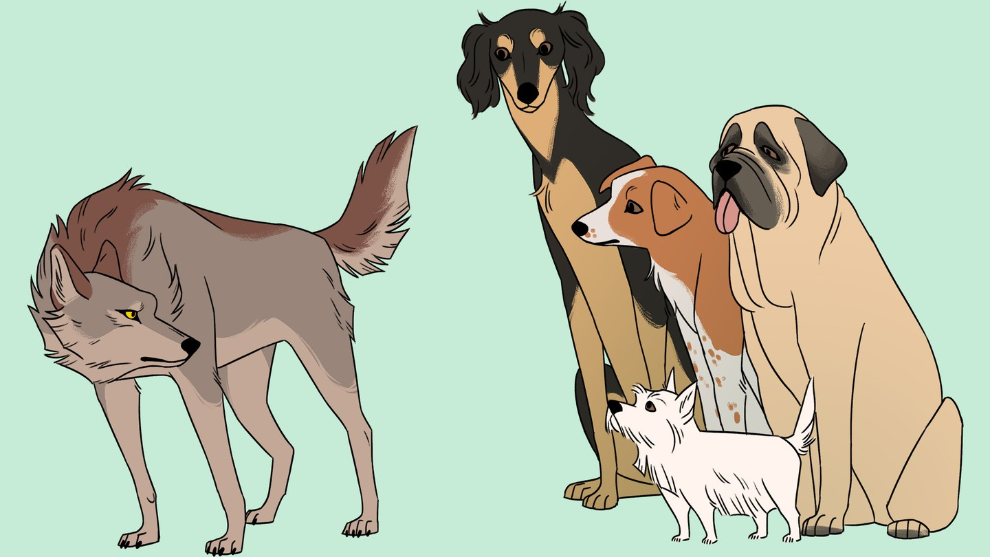 A cartoon drawing of a wolf facing a small pack of dogs of different breeds