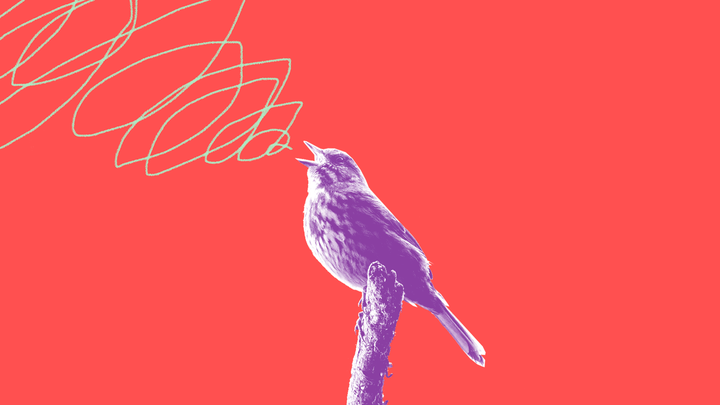 Illustration of a sparrow singing