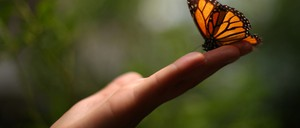 An orange-and-black monarch butterfly alights on an outstretched hand.