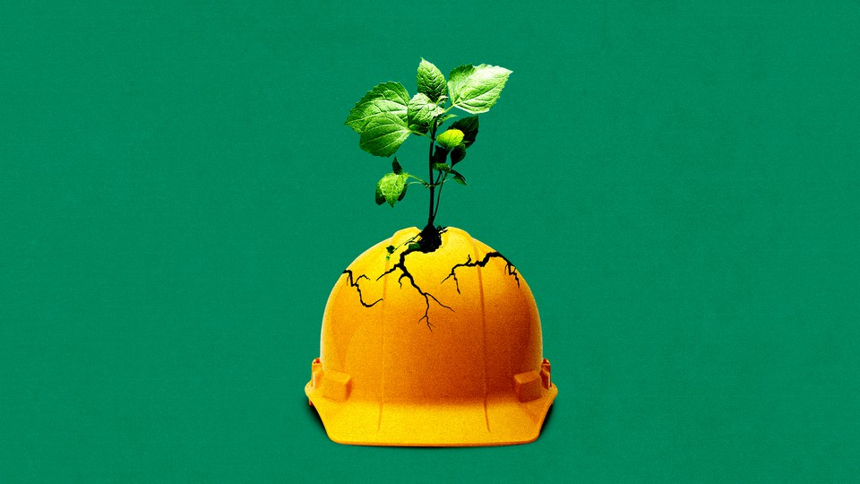 An illustration of a plant growing out of a hard hat.
