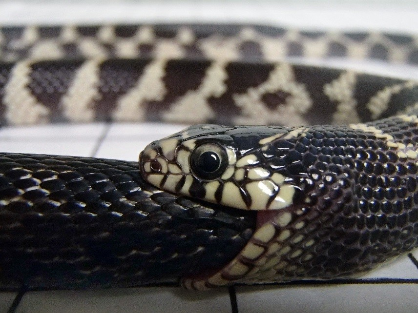 How To Kill A Snake When You Re A Snake The Atlantic