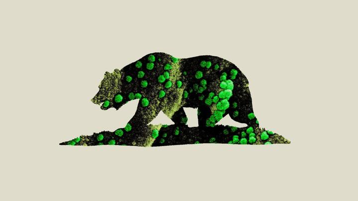An illustration of the California bear with a coronavirus map.
