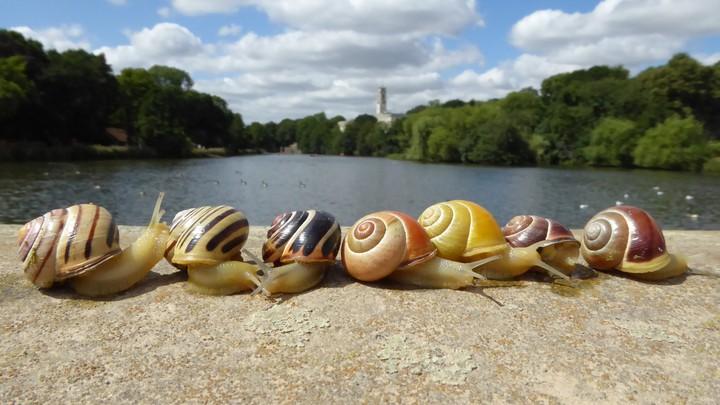 Snails lined up on a bridge