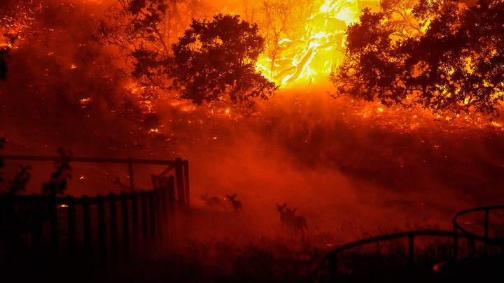 Wildlife runs across a burning tableau