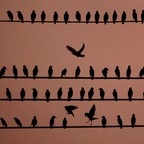 Birds vie for position on power lines at dusk
