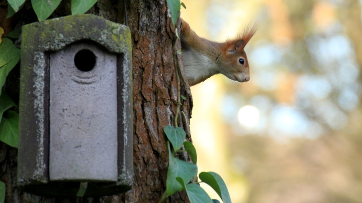 A squirrel sits in a tree next to a birdhouse.