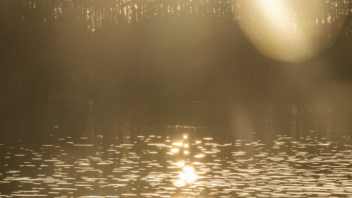 Sunlight glints on a pool of water