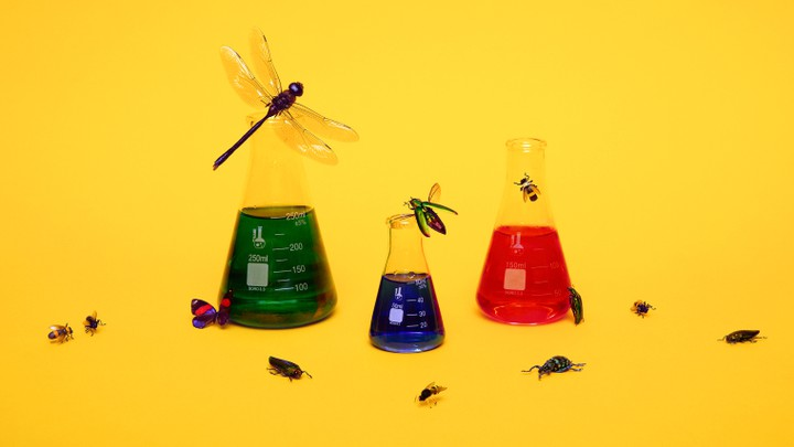 Laboratory flasks surrounded by insects