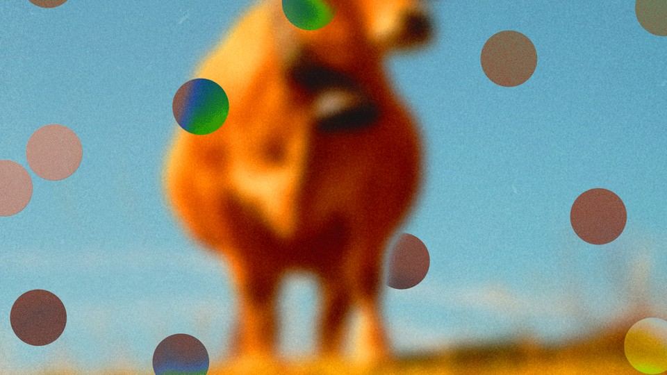 abstract illustration of cow with dots