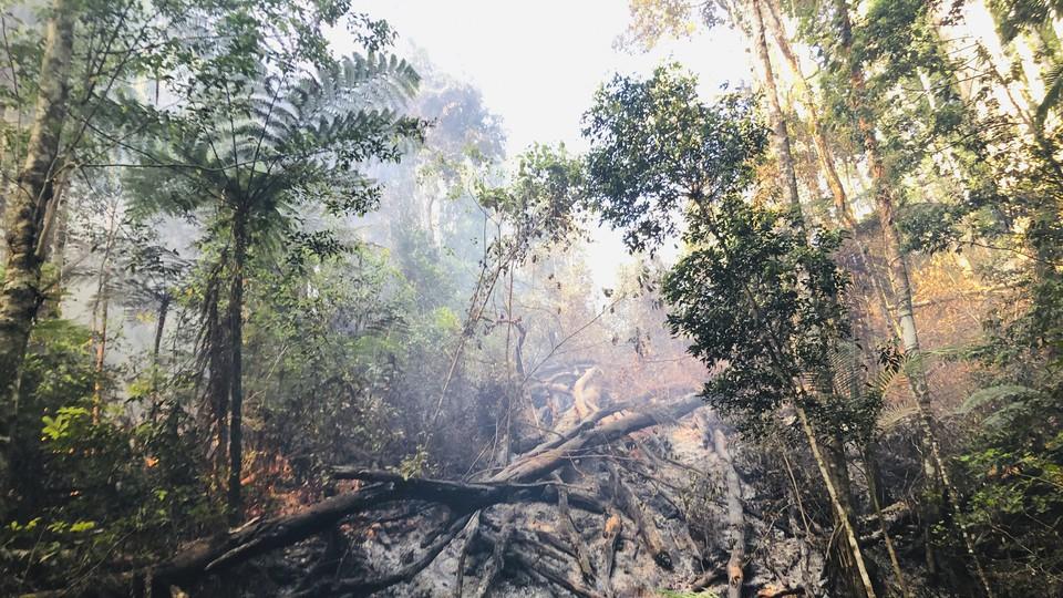 Bushfires left behind a burnt swathe of trees in Australia's Nightcap range.