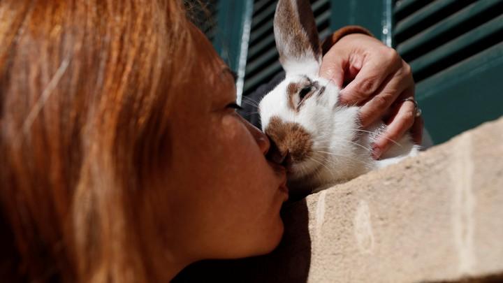 A woman kisses a rabbit.