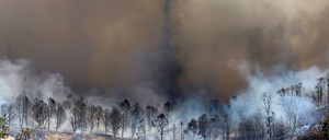 Smoke rises from a burned-out grove of trees at 2016's Blue Cut Fire in California.