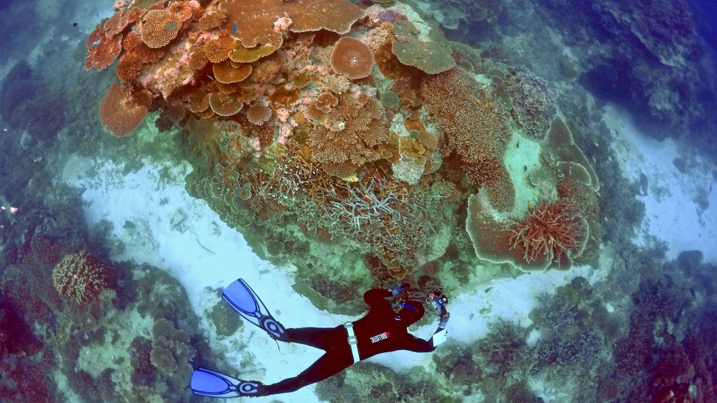 How Coral Researchers Are Coping With the Death of Reefs
