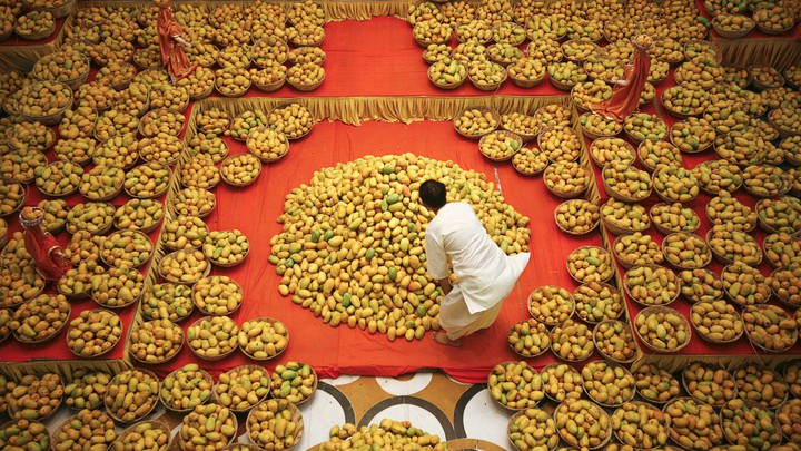 A Hindu priest inspects a large pile of mangoes in a temple full of baskets of mangoes.
