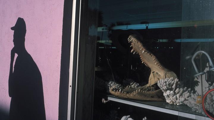 Photograph of an alligator skull