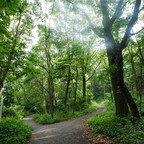 A forking path in the forest at Van Cortlandt Park in New York City.