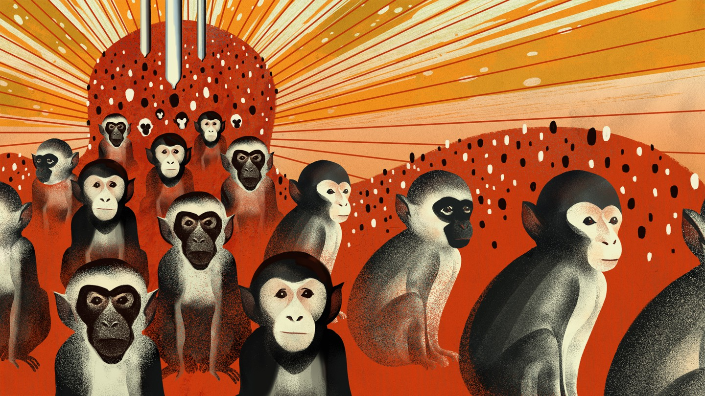 An illustration of monkeys on a red and orange background