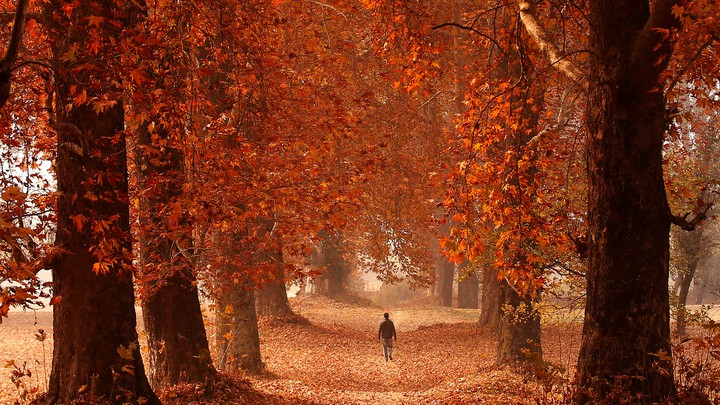 A man walking between trees with red leaves