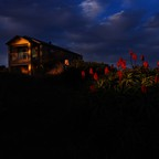 Fading golden light shines over a house and cluster of tall red flowers.