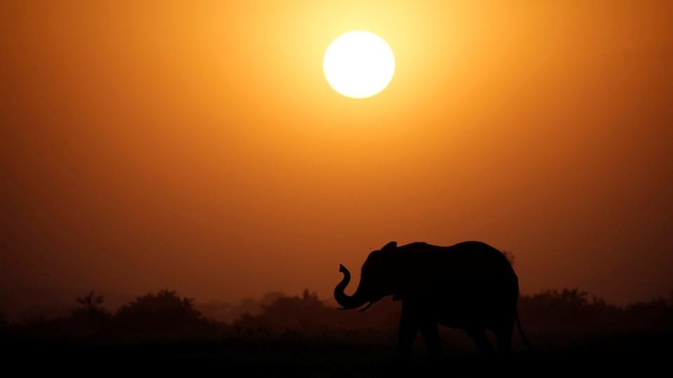 An elephant at sunset.
