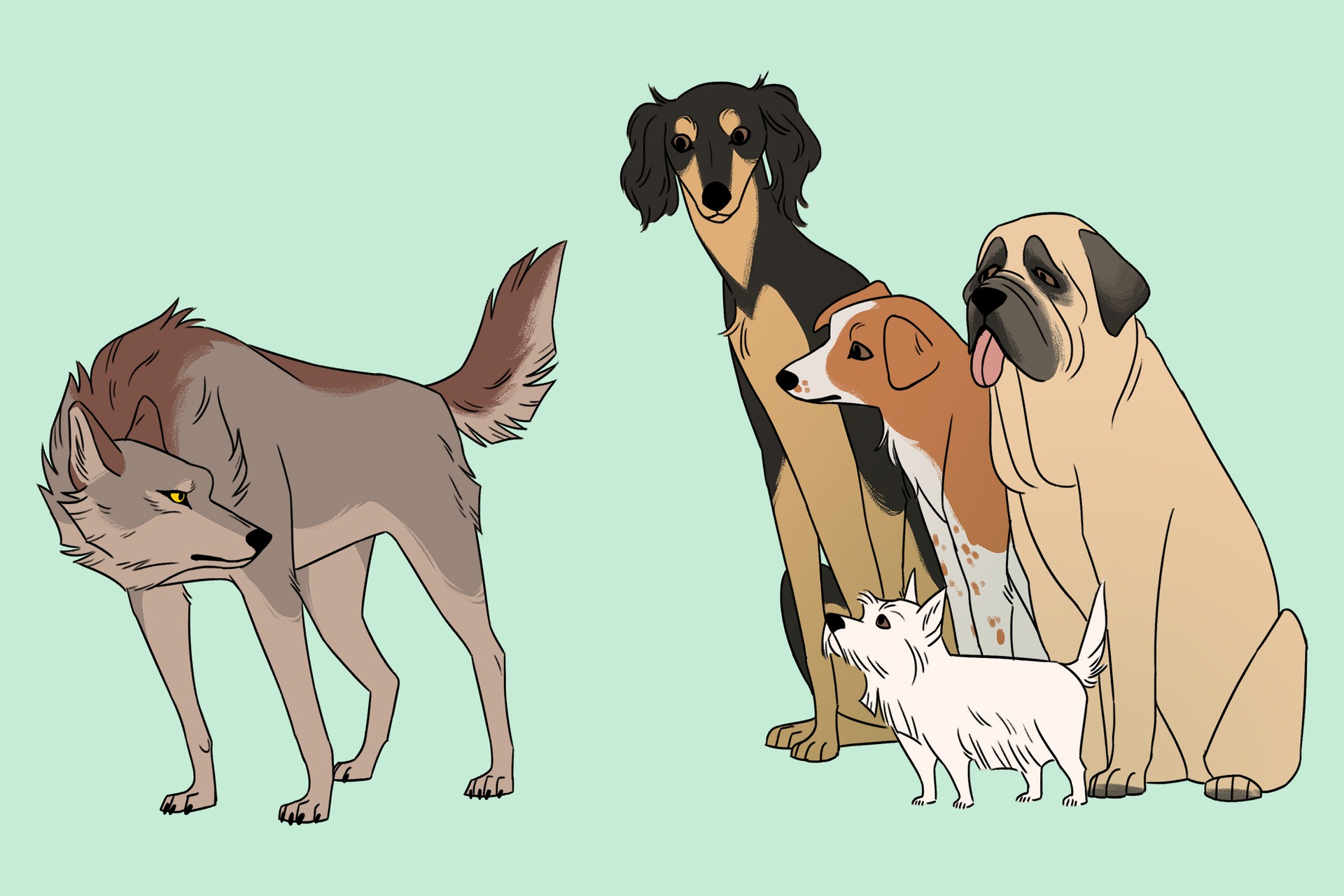 The Origin Of Dogs When Where And