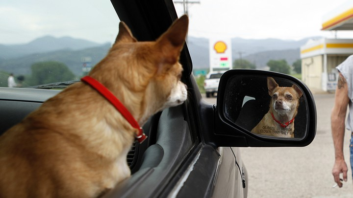 A dog stares at its own reflection in a car mirror.