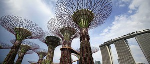 Supertrees, giant tree-like vertical gardens, in Singapore's Gardens By the Bay