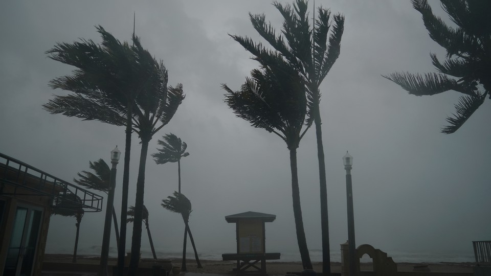 Hurricane Irma batters palm trees and a lifeguard hut in Hollywood, Florida