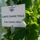 """A sign that says """"CLIMATE CHANGE TRIALS: Solar radiation effect"""" posted next to grapevines in a vineyard in Catalonia."""