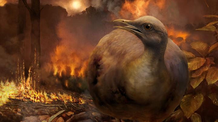 A bird walks through a burning forest.