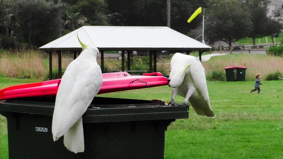 Two birds sitting on a trash bin
