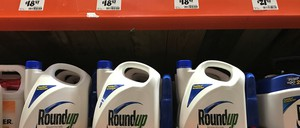 Plastic containers of the weed killer Roundup lined up on store shelves.