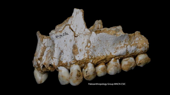 A fragment of a Neanderthal jaw