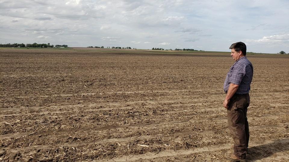 A soybean farmer looks out at his field in Wilton, Iowa.