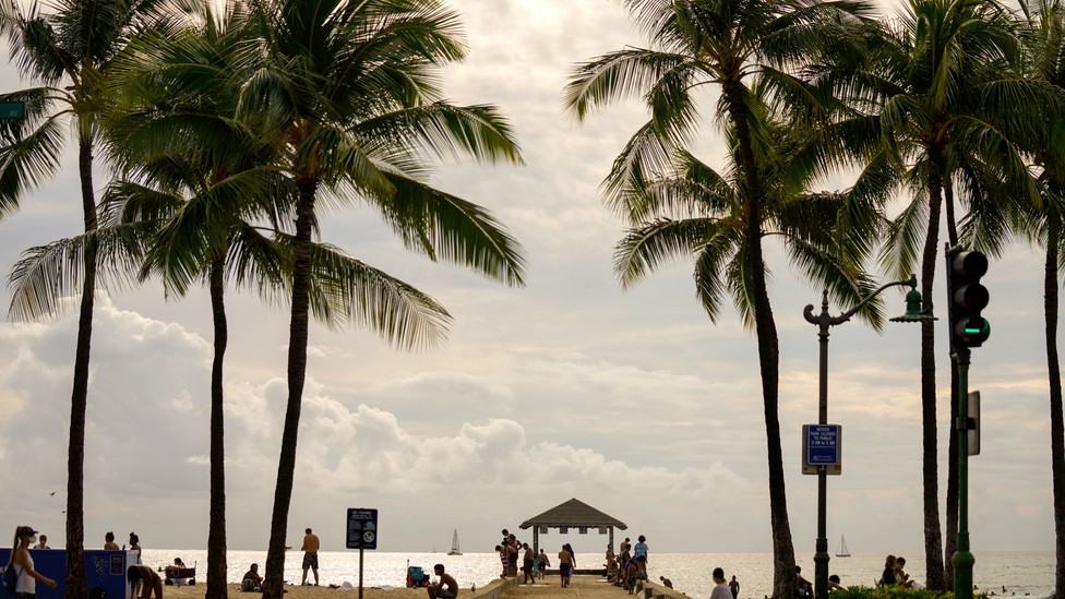 a beach with palm trees