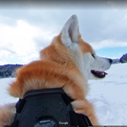 It's Google Street View, but with a dose of cuteness.
