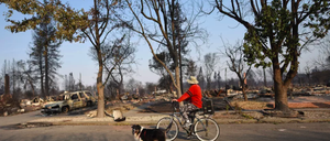 A man accompanied by a fluffy dog rides past a burned-down neighborhood.