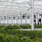 Canadian Prime Minister Justin Trudeau tours an urban greenhouse.