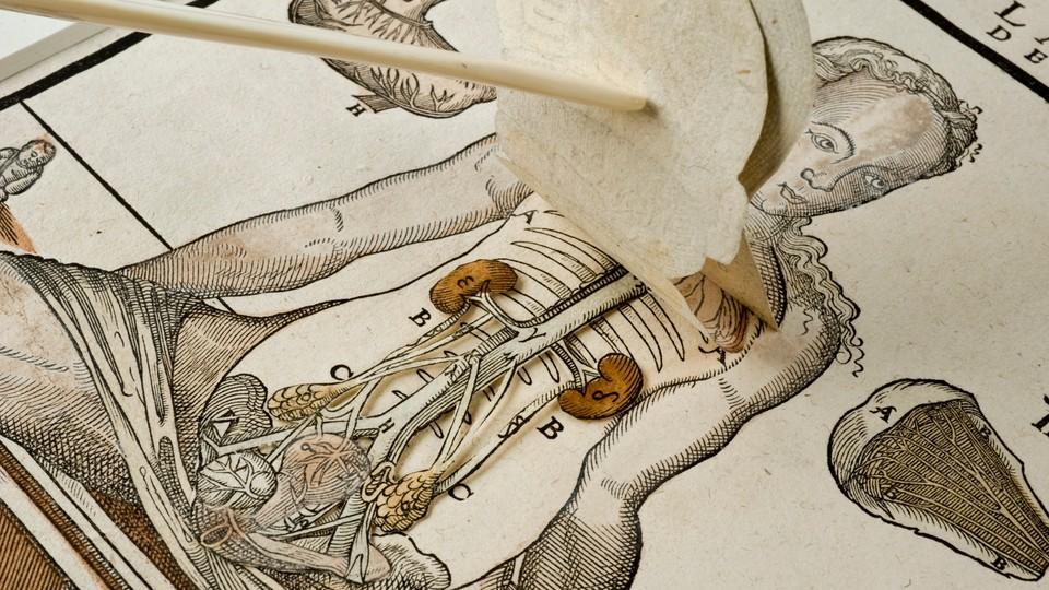 A fugitive sheet showing female anatomy