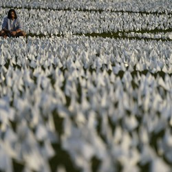 A person sits and looks at a sea of small white flags on the grass of the National Mall.