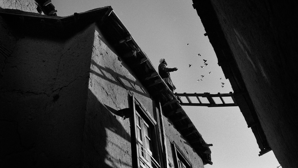 A black-and-white photo of a man looking up at some nearby birds from a rooftop