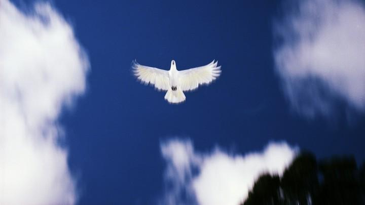 A dove flying across a blue sky