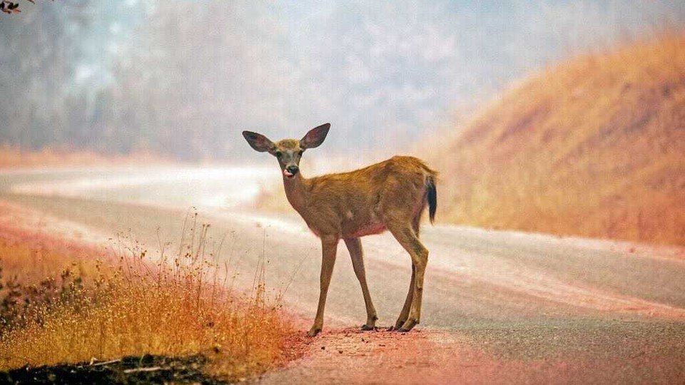 A deer stands in the middle of a road.