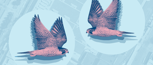 An illustration of birds flying over the Javits Center green roof