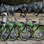 Shared bikes await their riders in Dallas.