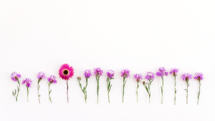 A line of pink flowers
