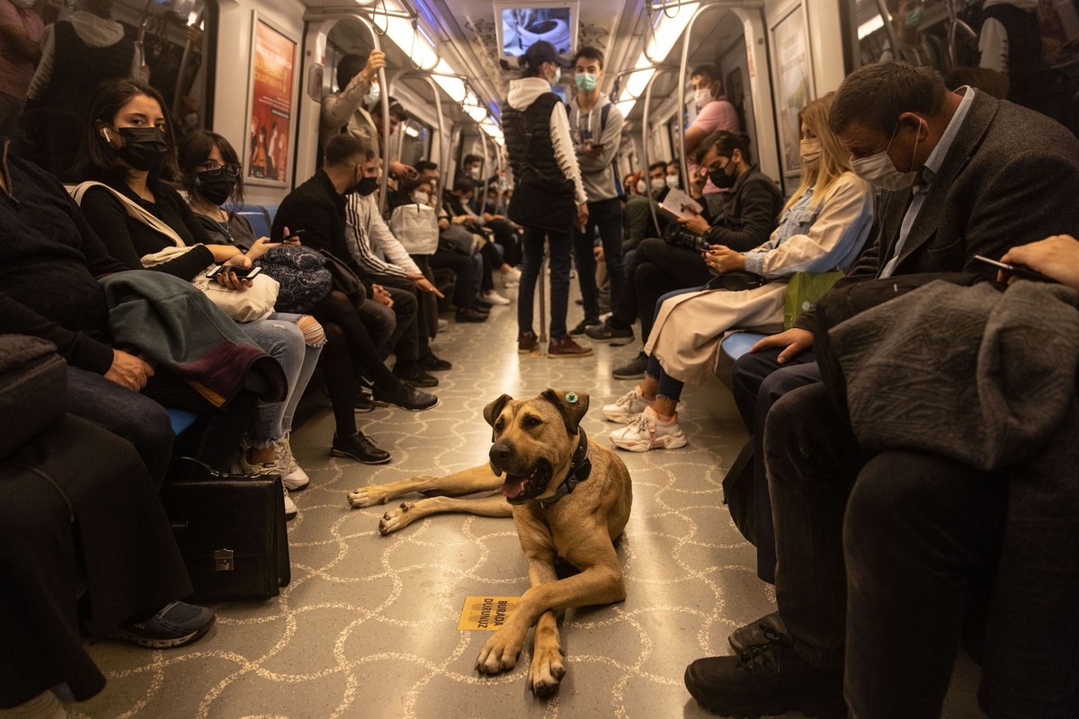 A dog lies on the floor of a subway car, surrounded by commuters who largely ignore him.