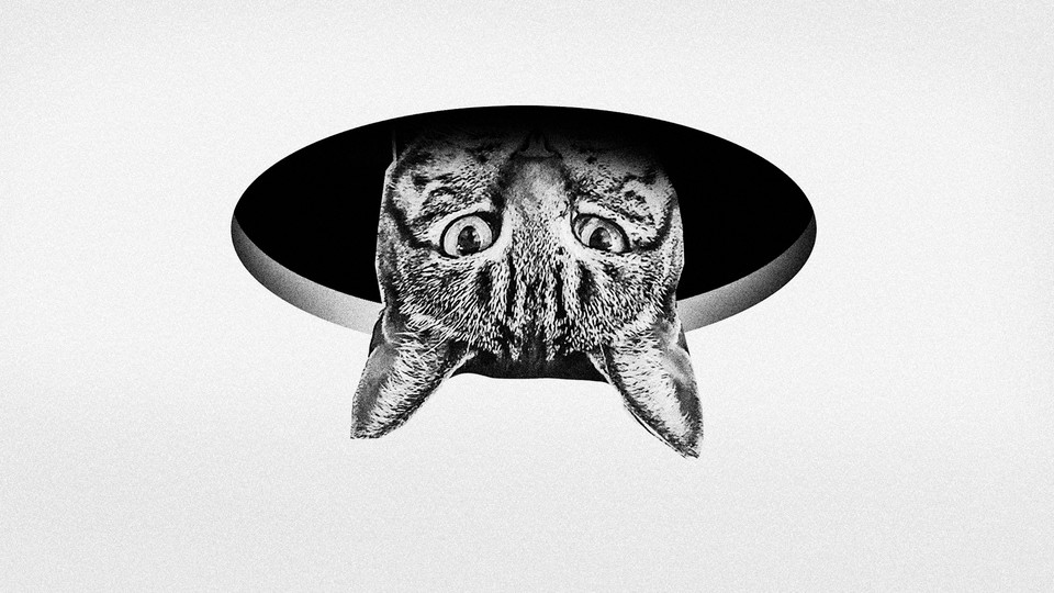 A cat's head pops through a hole in the ceiling