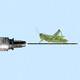 a grasshopper waits on a vaccine syringe