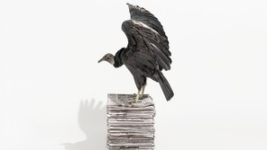 A dark-feathered vulture stands in profile, wings raised, on a stack of newspapers